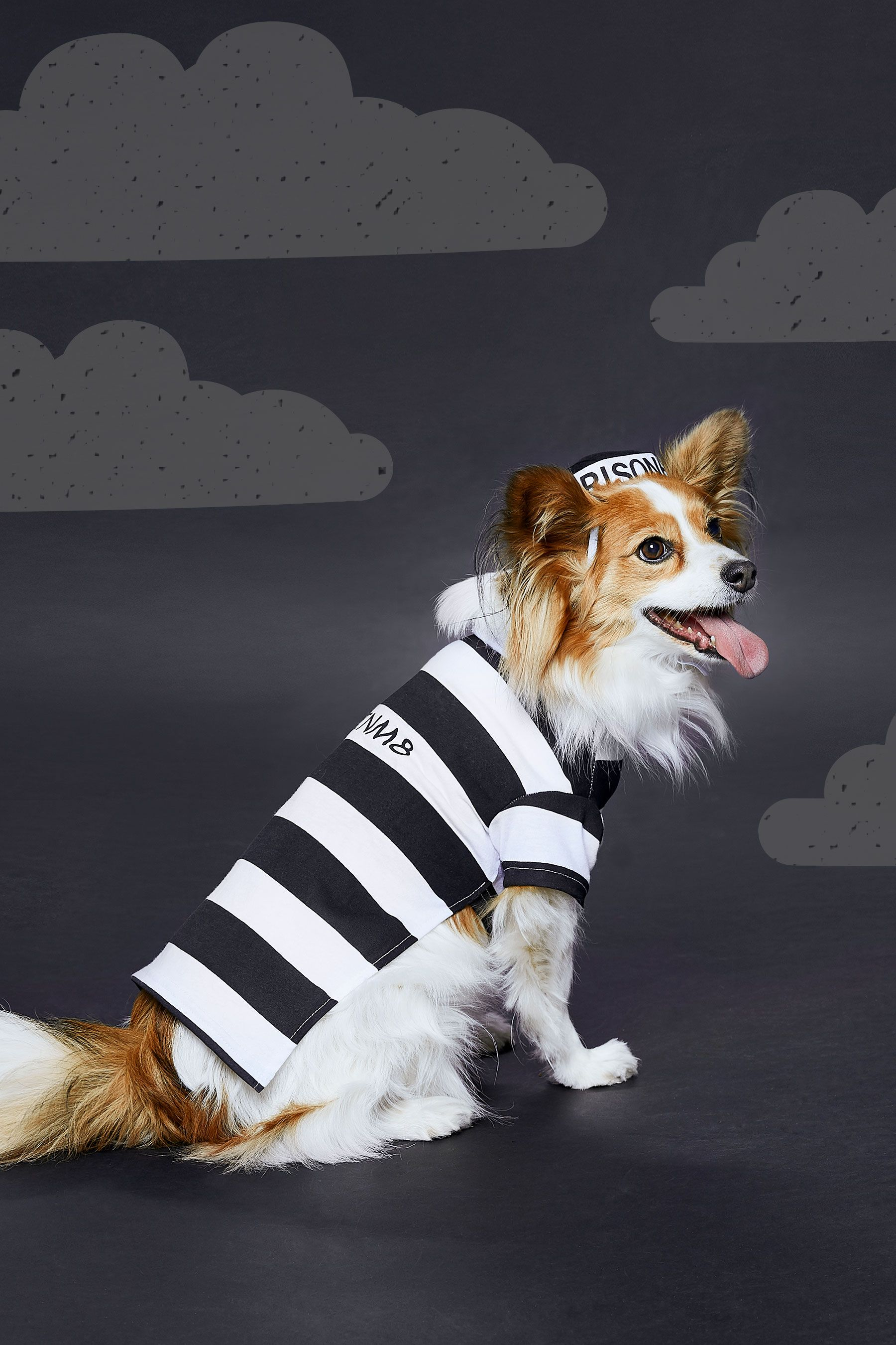 With The Frisco Prisoner Dog Cat Costume Your Pooch Or Kitty