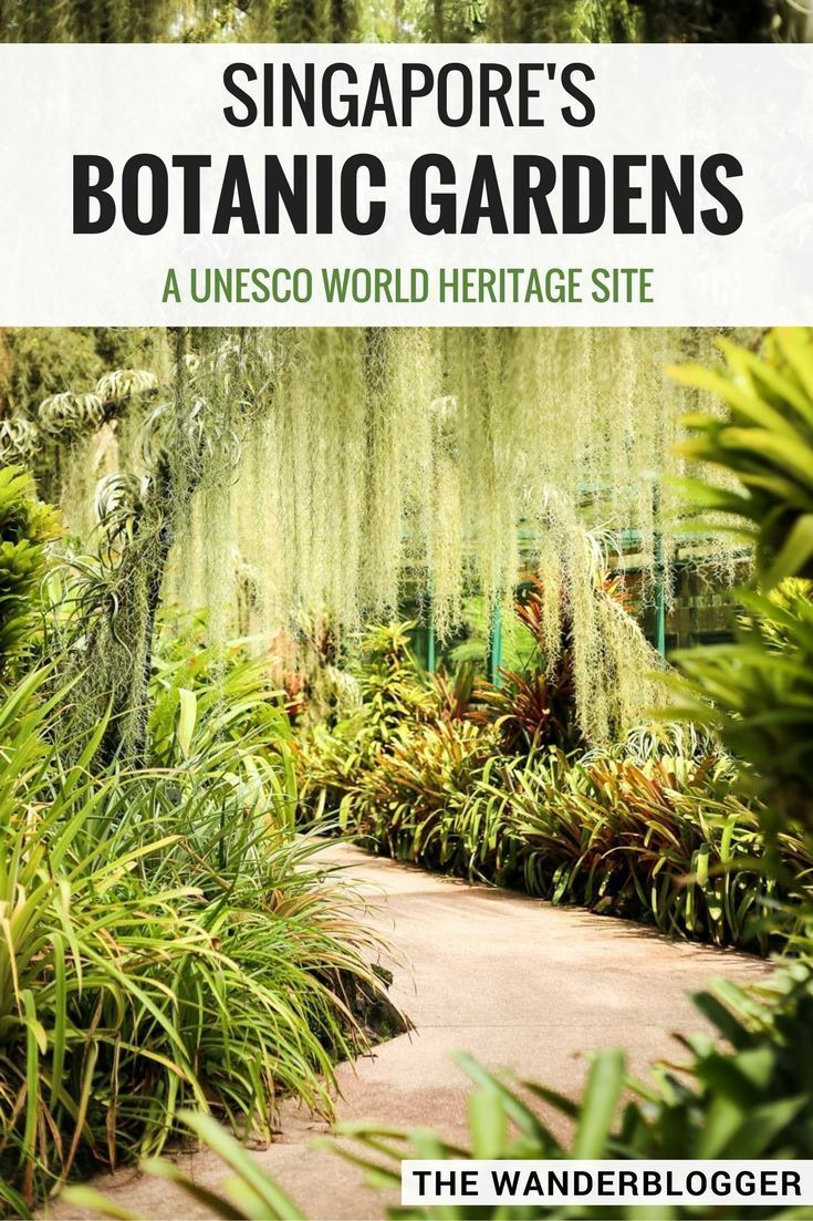The Botanic Gardens: Singapore's Tropical Garden Paradise #botanicgarden
