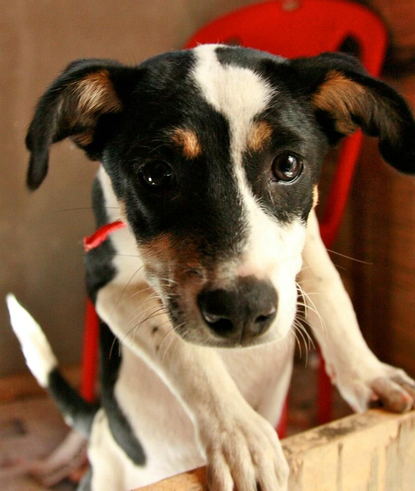 Pet Carnival and Adoption drive at Jaaga Pet adoption