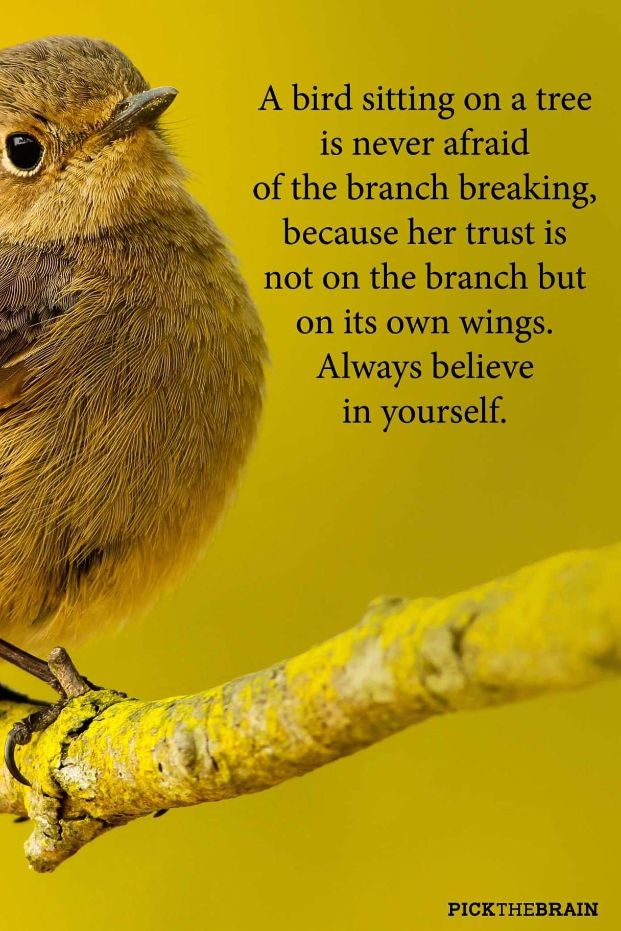Pin By Carmel Anne O Reilly On Birds With Images Believe In