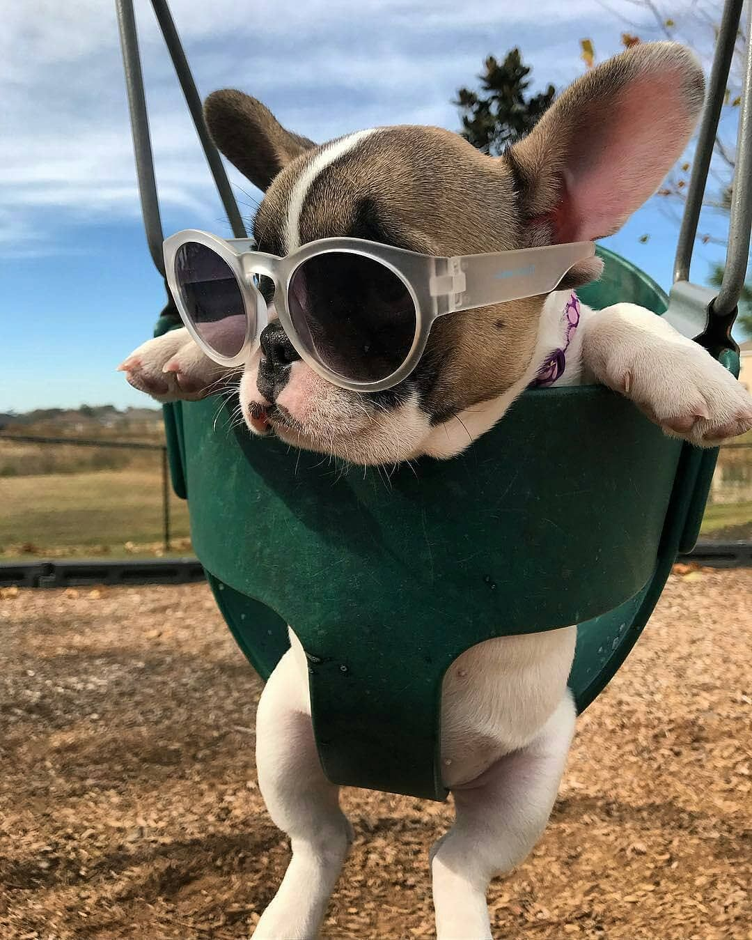 French Bulldog On Instagram Let The Sunday Begin Frenchiegiorgia Cute Animals Images Cute Animals Cute Animal Pictures