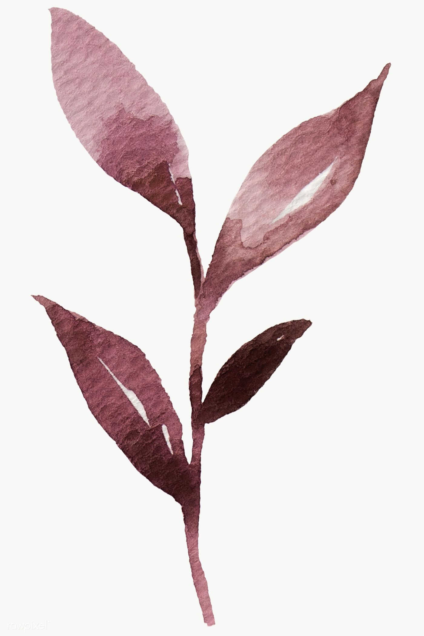 Download Premium Png Of Hand Painted Purple Watercolor Leaf Transparent Purple Watercolor Watercolor Leaves Flower Illustration