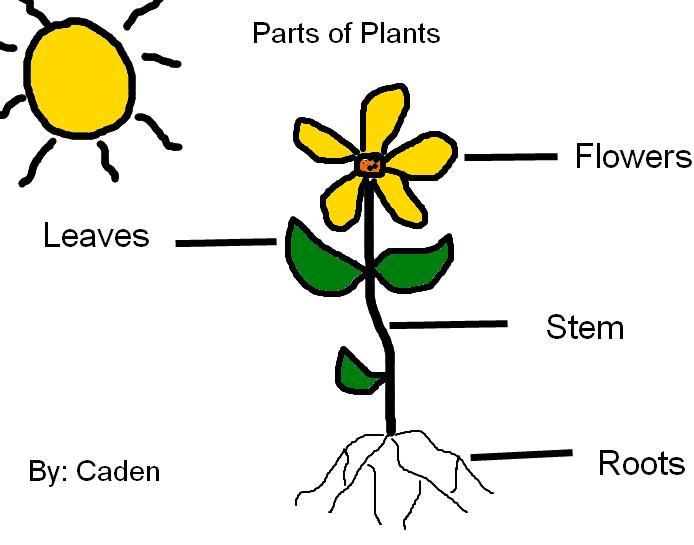 Labeling Parts of Plants | K-5 Computer Lab | Plant ...