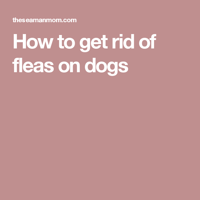 how to get rid of pets in wow