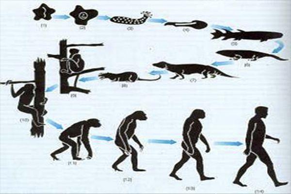 Photo Teoriacutea Sobre El Origen De Las Especies Charles Darwin Zpsqrdqogmb Jpg Evolucion Del Hombre Evolucion Biologica Evolucion De La Vida