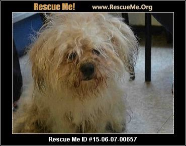 Urgent This Animal Could Be Euthanized If Not Adopted Soon Animal Id A1038899shisho Male Maltese Mix Age Young Adult With Images Shih Tzu Mix Pet Wellness