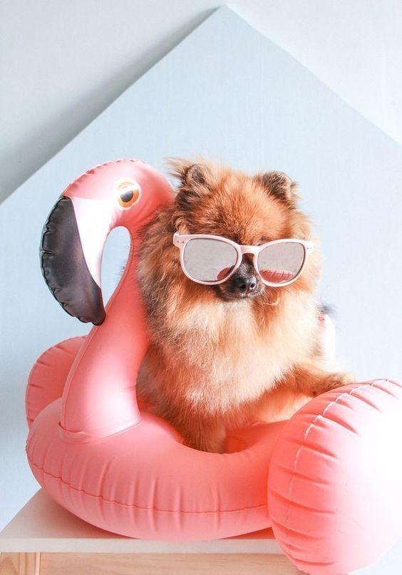 370 Ideas De Perritos Ropa Para Perros Vestidos Para Perros Ropa Para Mascotas