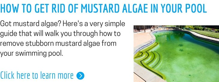 The perfect pool blog how to get rid of pool algae green - How to get rid of algae in a swimming pool ...