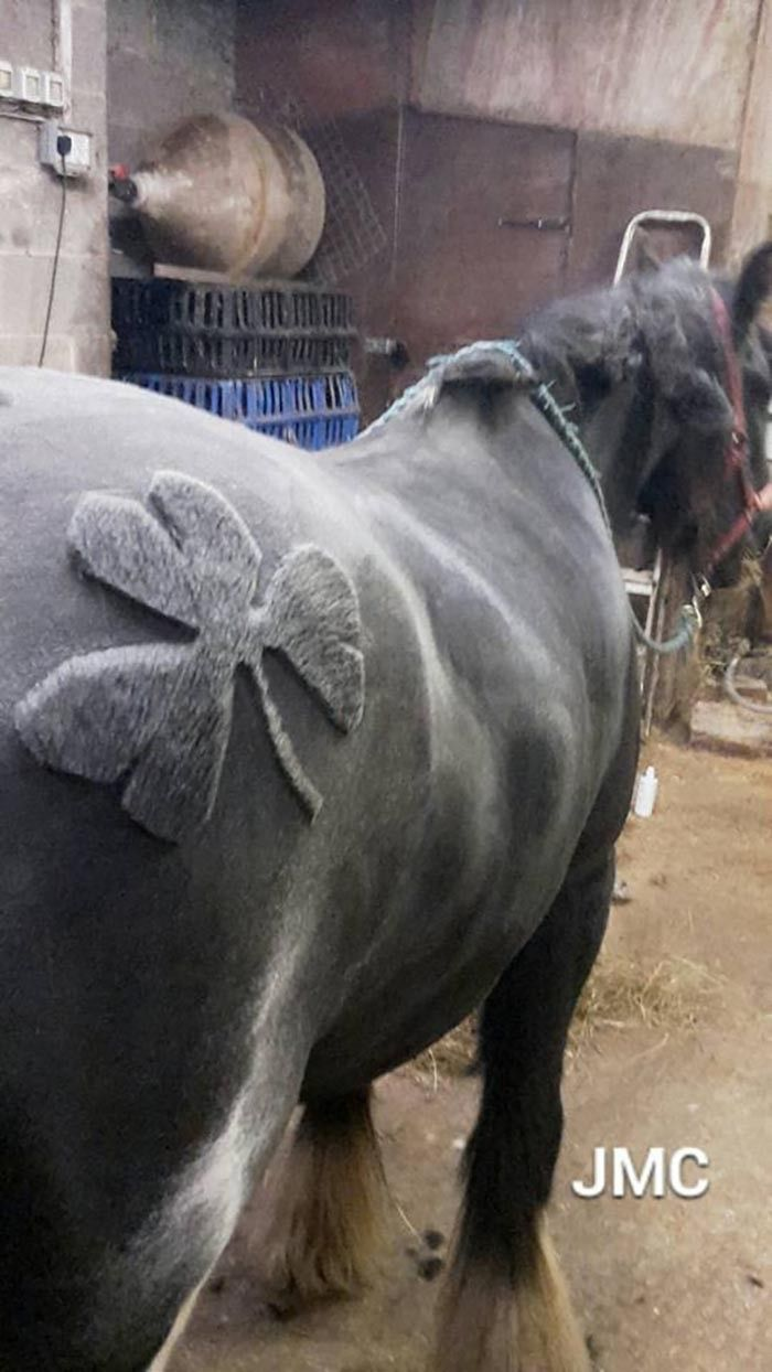 These Horses Are Getting The Coolest Haircuts Ever