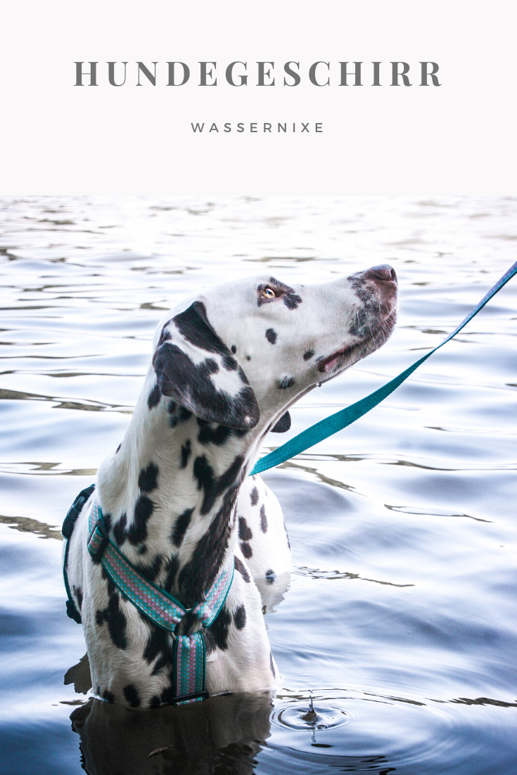 Hundegeschirr Hunde Turkis Rosa Blau Schuppen Muster Meerjungfrau Hund Welpe Haustier Edel Elegant Bulldogge Labrador Hunde Hundegeschirr Haustiere