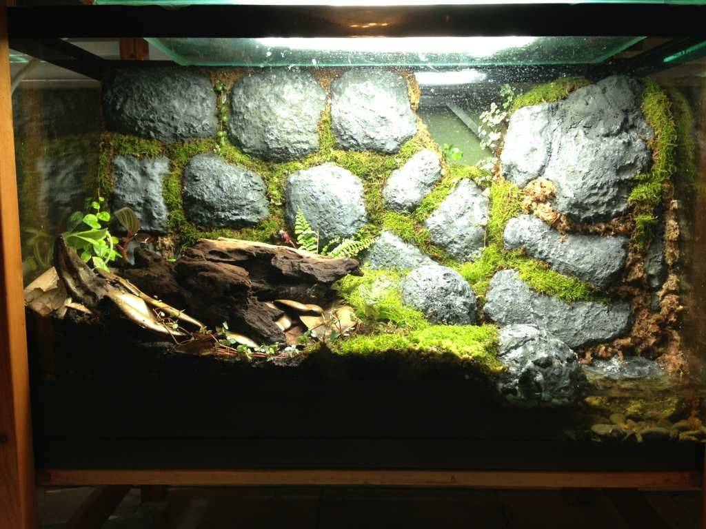 Crumbling wall vivarium for frogs hermit crabs pinterest