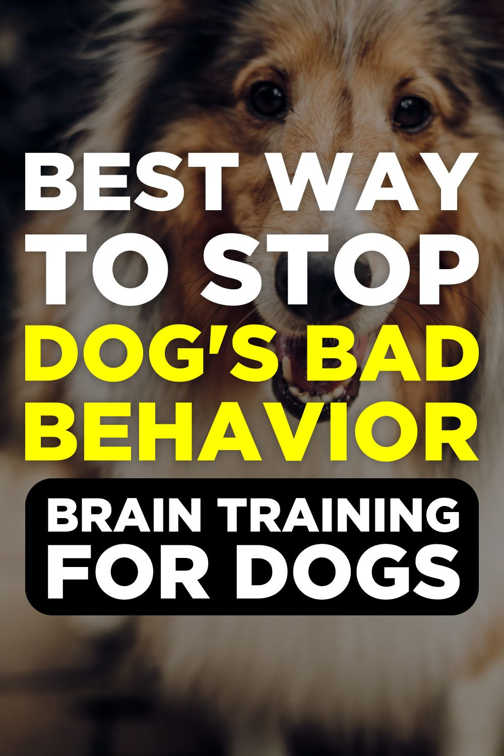 Brain Training For Dogs Review Dog training, Training a
