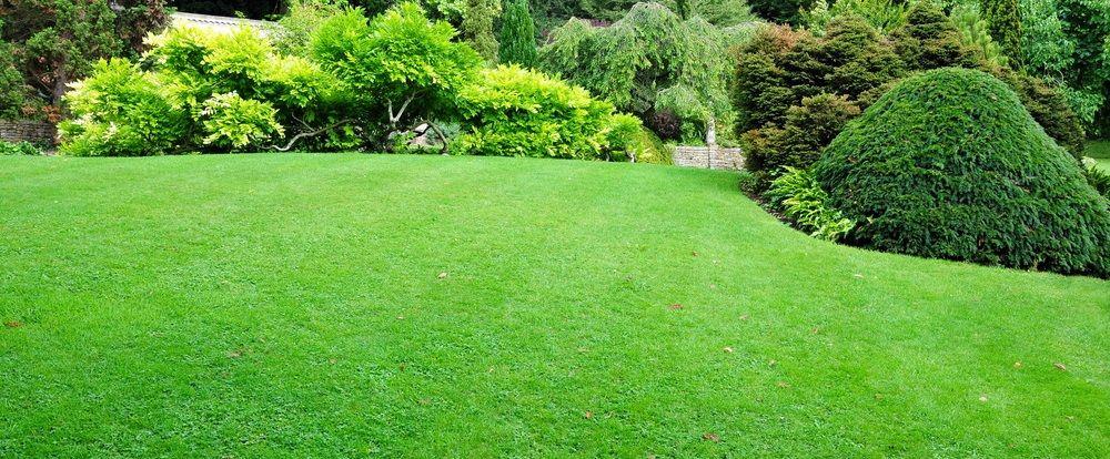 Lawn Mowing & Gardening Bateau Bay Fox Mowing Your Local