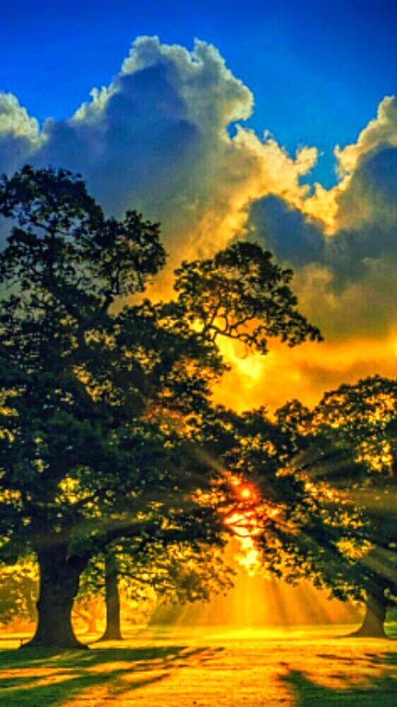 Sunrise Behind A Tree Beautiful Nature Beautiful Landscapes Nature Photography