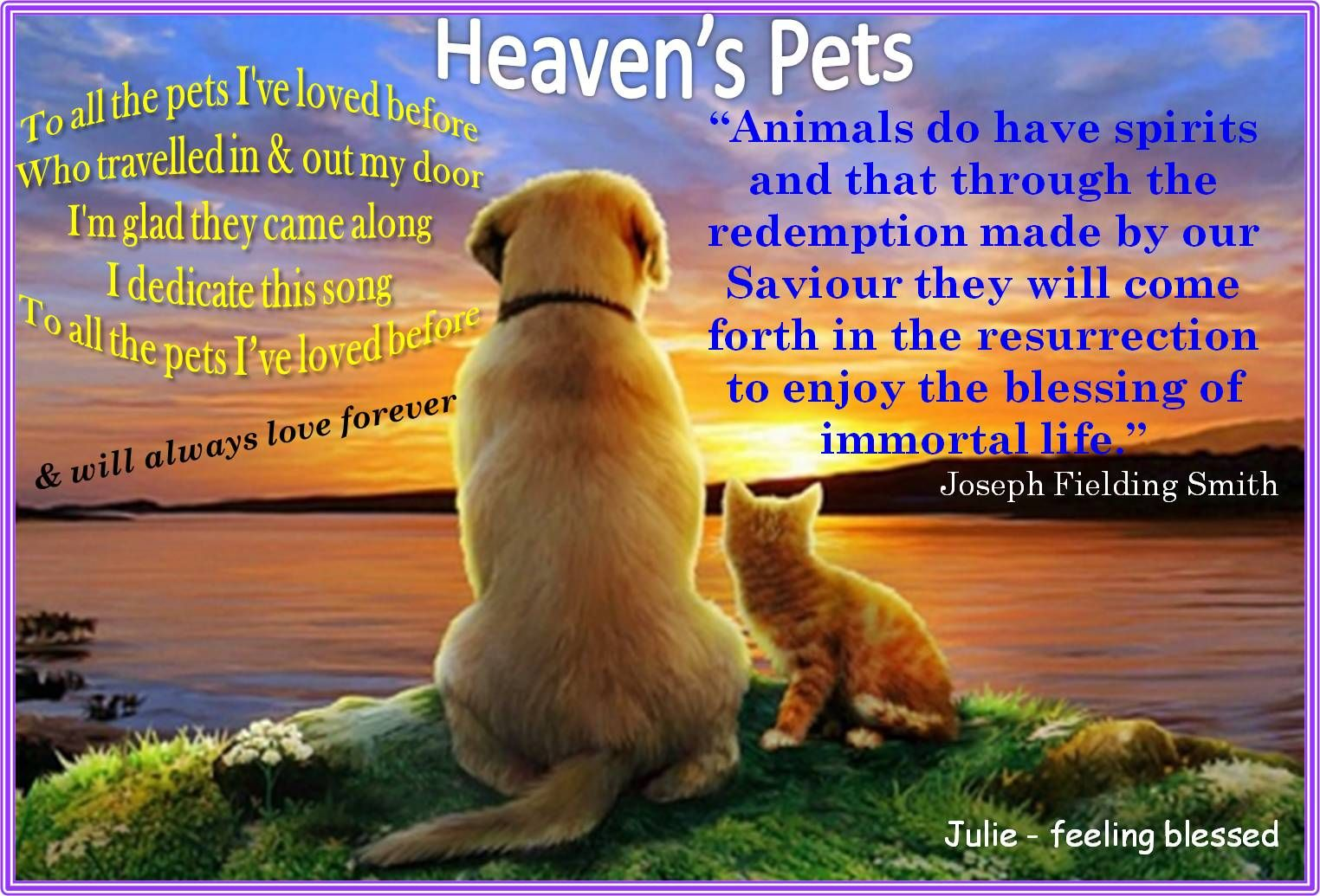 To all my pet's I've loved before (& will forever