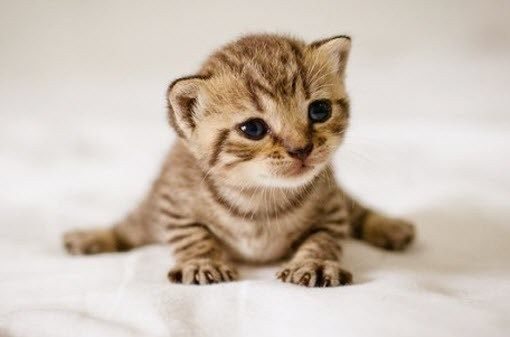 So to finish my spree of extremely cute kittens……..