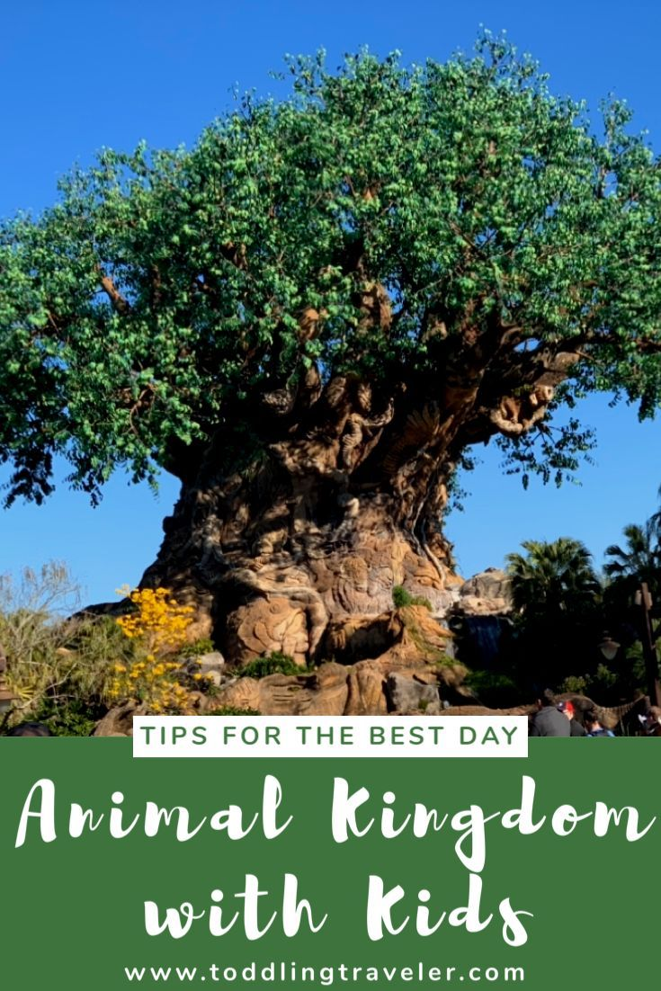 13+ Things to do at animal kingdom ideas