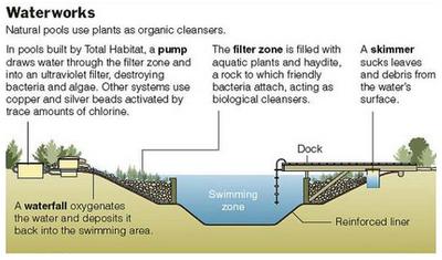 acalyencanto: Piscinas naturales, una opción limpia y ecológica.