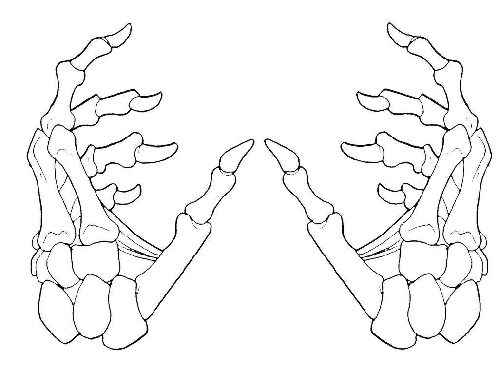 Skeleton Hands 2-1 by krazykavumaster.deviantart.com on @DeviantArt ...