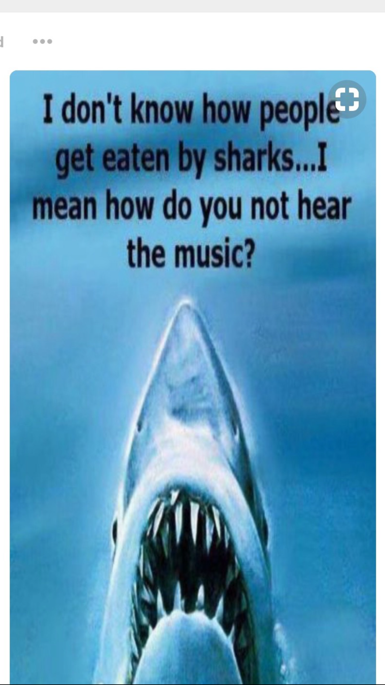 Pin By Judy Galloway On Quotes Sharks Funny Funny Pictures Tumblr Scary Music