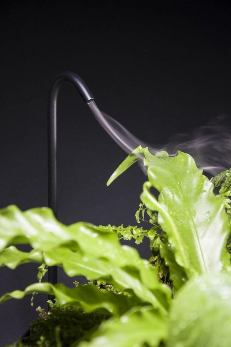 optimale zimmerpflanzen pflege bewässerung dampf design   haus