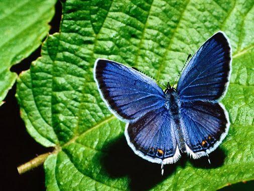 Coloring4all – Google+ | Бабочки | Pinterest | Google