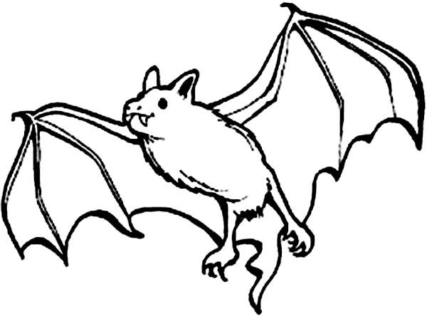 Bats Picture of Bats Coloring Page Coloring 4 Kids Halloween