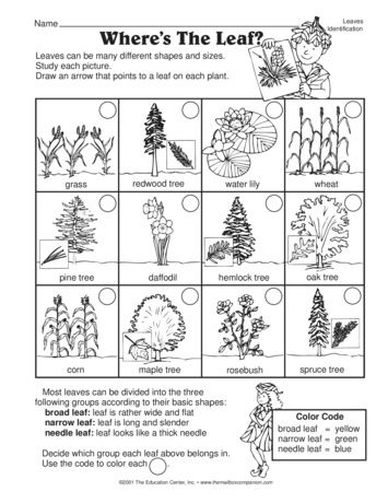 A great science worksheet for a study of leaves and leaf