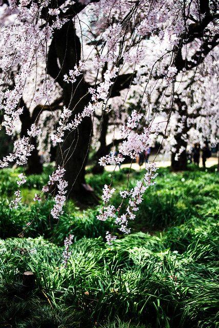 kuroyuki.tumblr.com