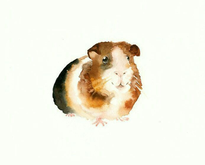 Pin On Crit Guinea Pig