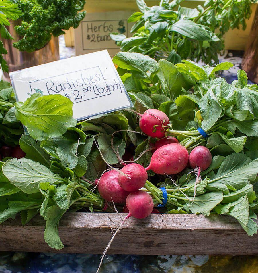 Winter Vegetables Gardening