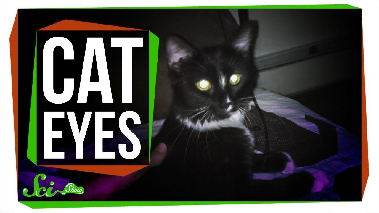 Warum leuchten Katzenaugen im Dunkeln? WAS IST WAS
