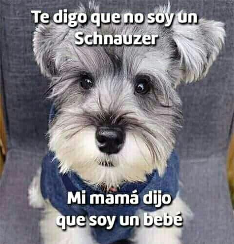 Mi Perro Mi Bebe Perros Divertidos Perros Frases Perros