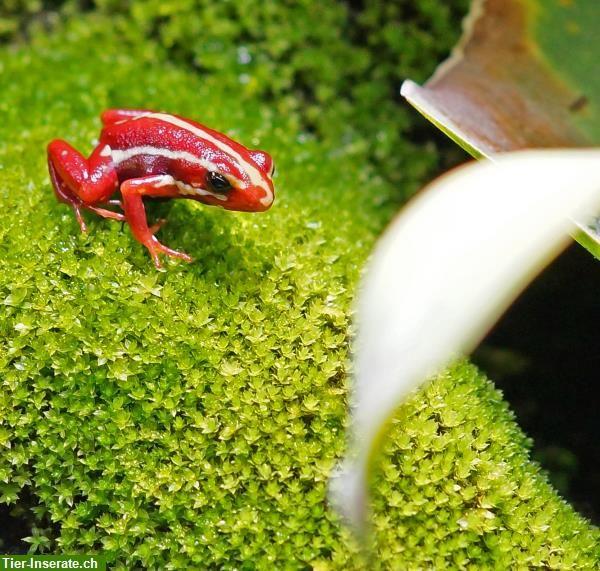 Pin Auf Dart Frog
