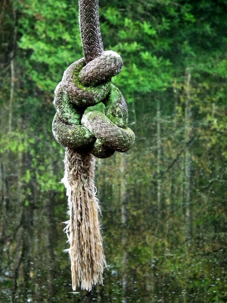 Pin by Sonja on Tying the Knot Rope swing, Tie the knots
