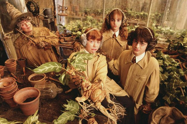 Can You Identify These Magical Harry Potter Plants Harry Potter Plants Harry Potter Characters Harry Potter Movies