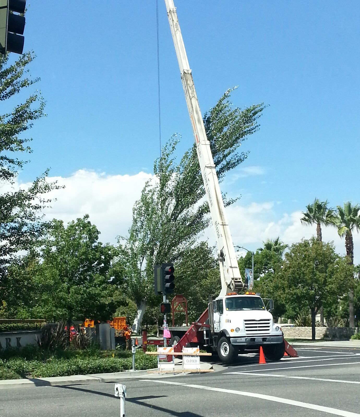 """Any idea why they have to remove the trees at Natomas Boulevard and Club Center Drive?"" Read the answer at: http://www.natomasbuzz.com/?p=8651"