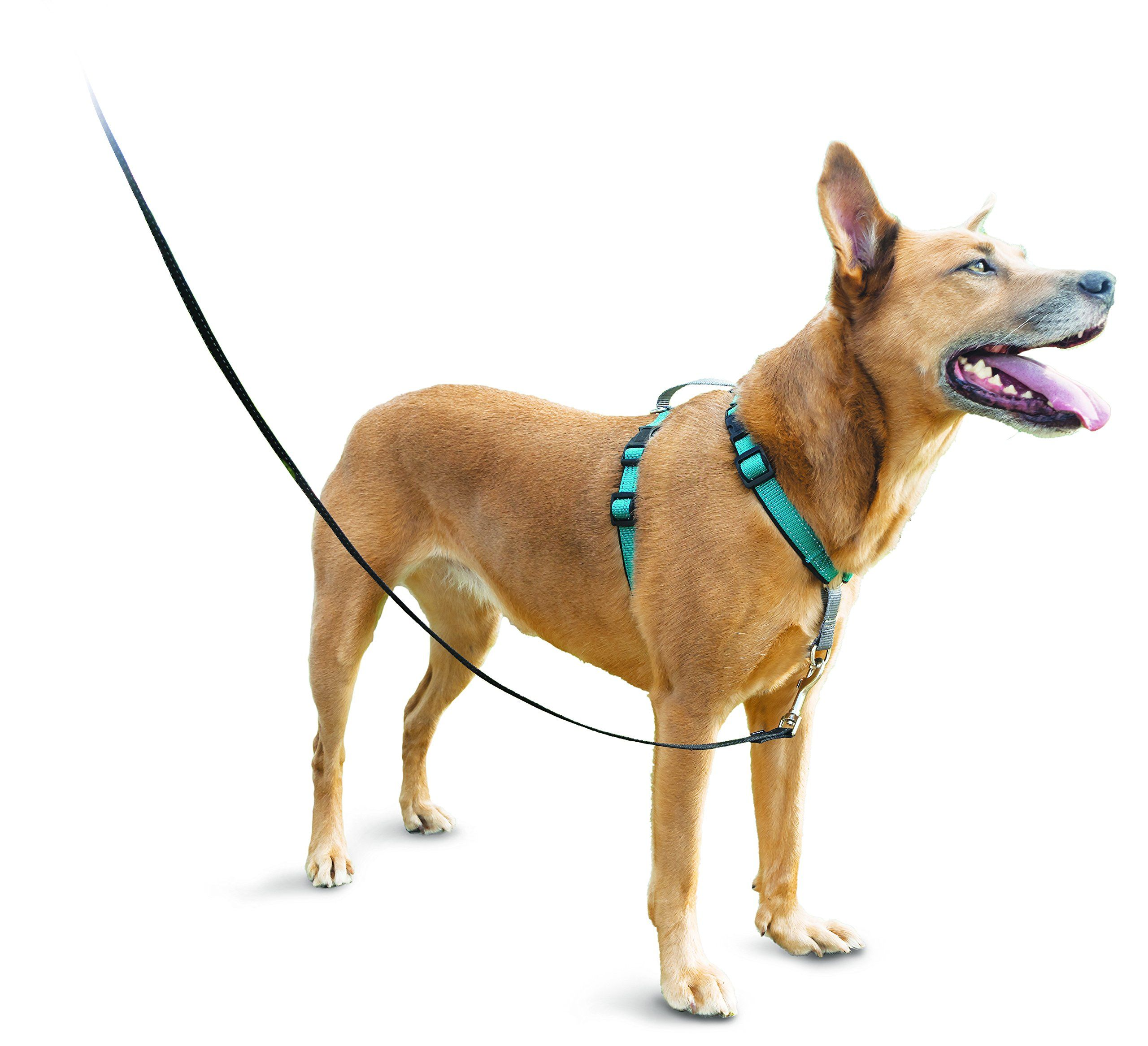 PetSafe 3in1 Harness from the Makers of the Easy Walk