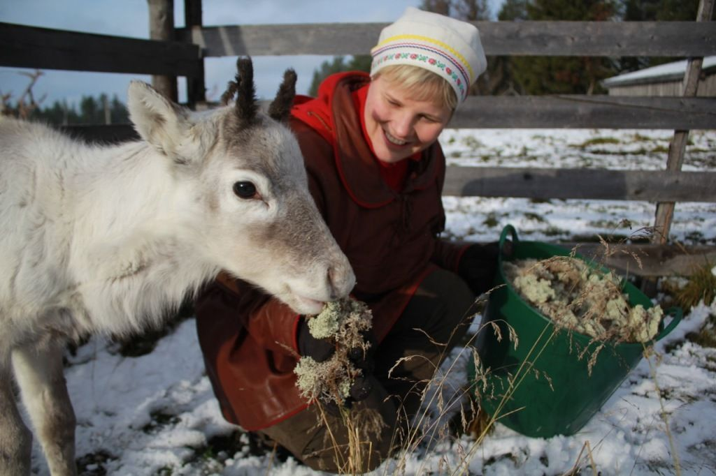 Visiting a Reindeer Farm in Finland!