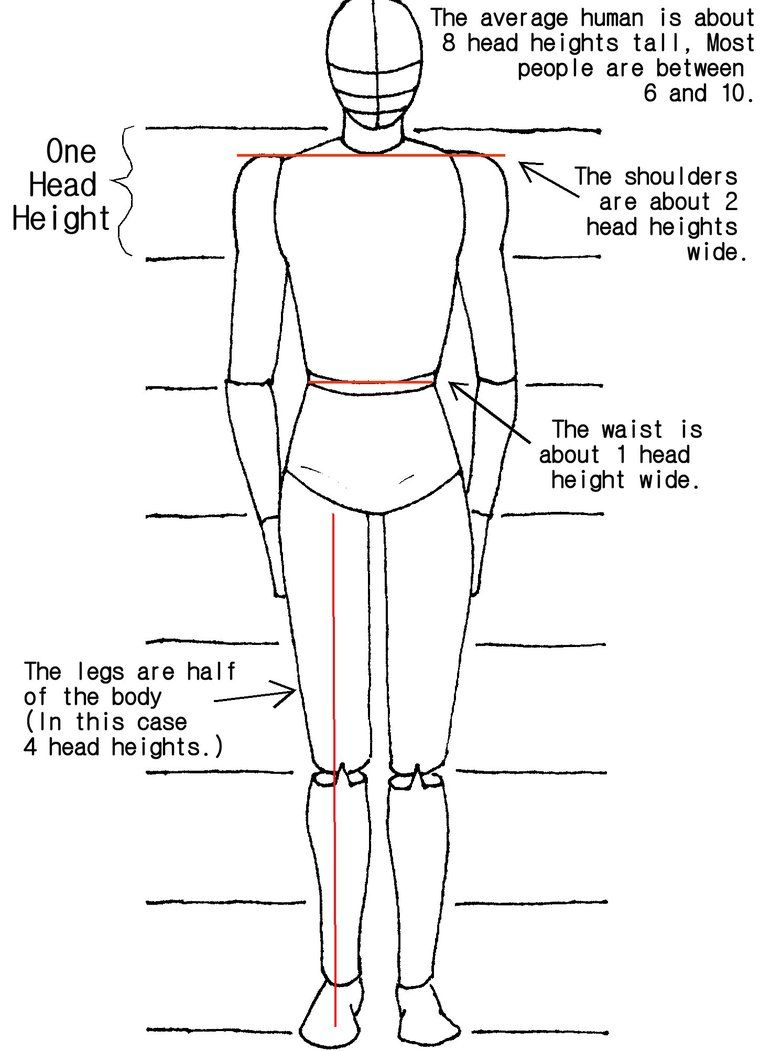 Today's Drawing Class 101: Understanding body proportions