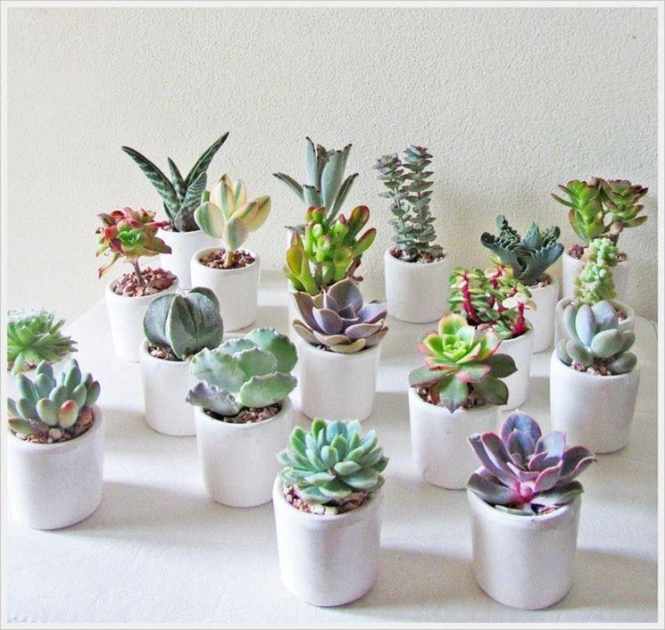 Bomboniere piante grasse fai da te cerca con google marturii pinterest plantes fleurs - Mini plante grasse mariage ...
