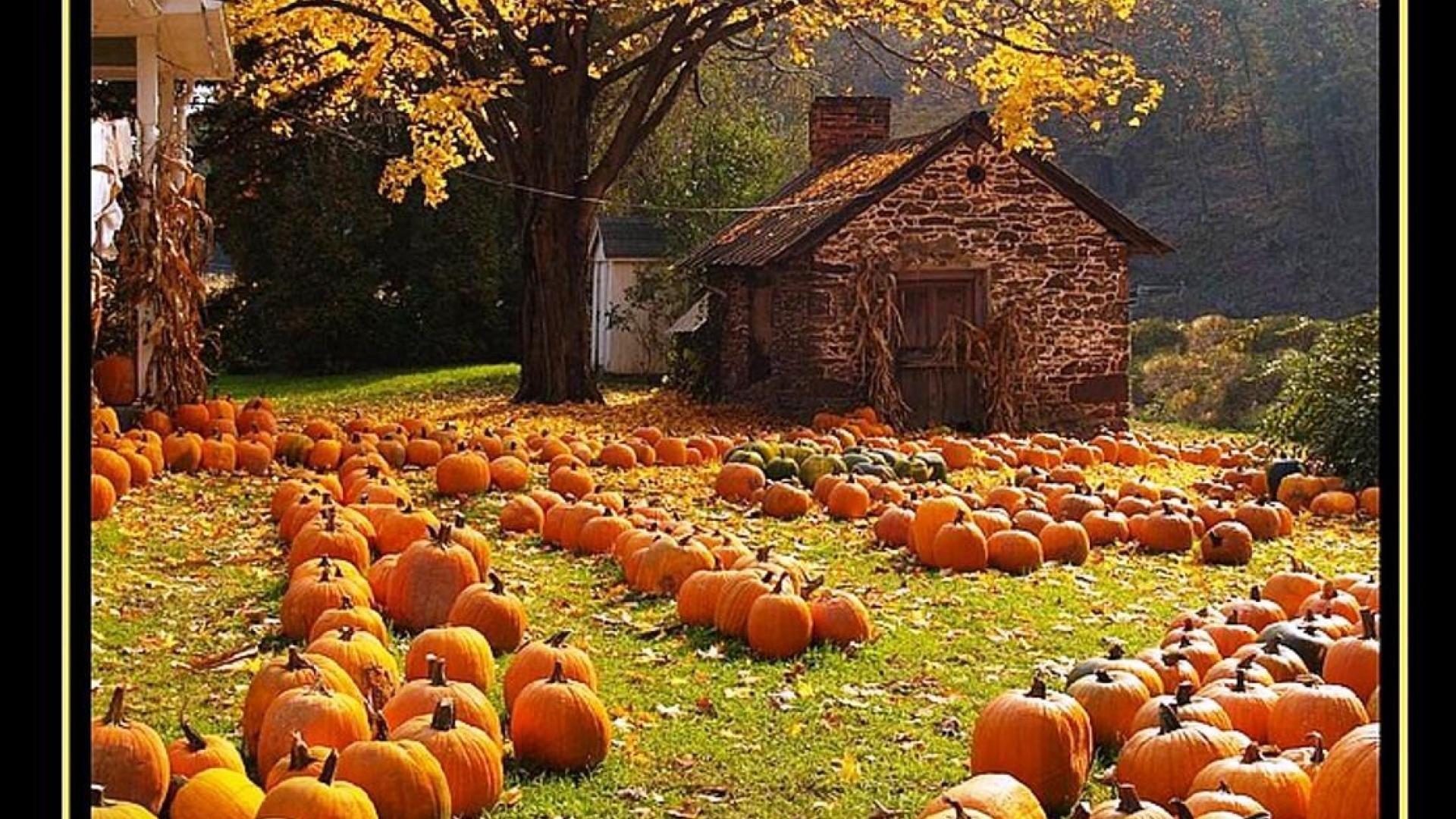 Autumn Harvest Wallpaper Widescreen wallpaper. Pumpkin