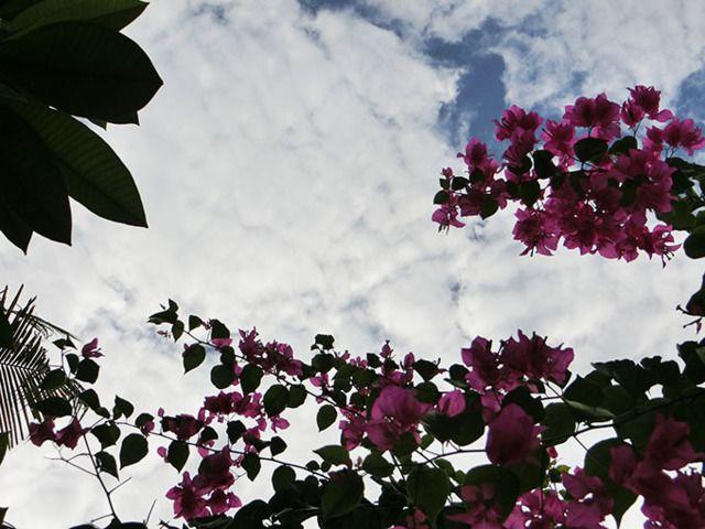 4/21(木)バリ島ウブドの天気は曇り 温度28.6℃、湿度72%。  雲が多めの空模様。 セミが大合唱し、賑やかな朝です~♪