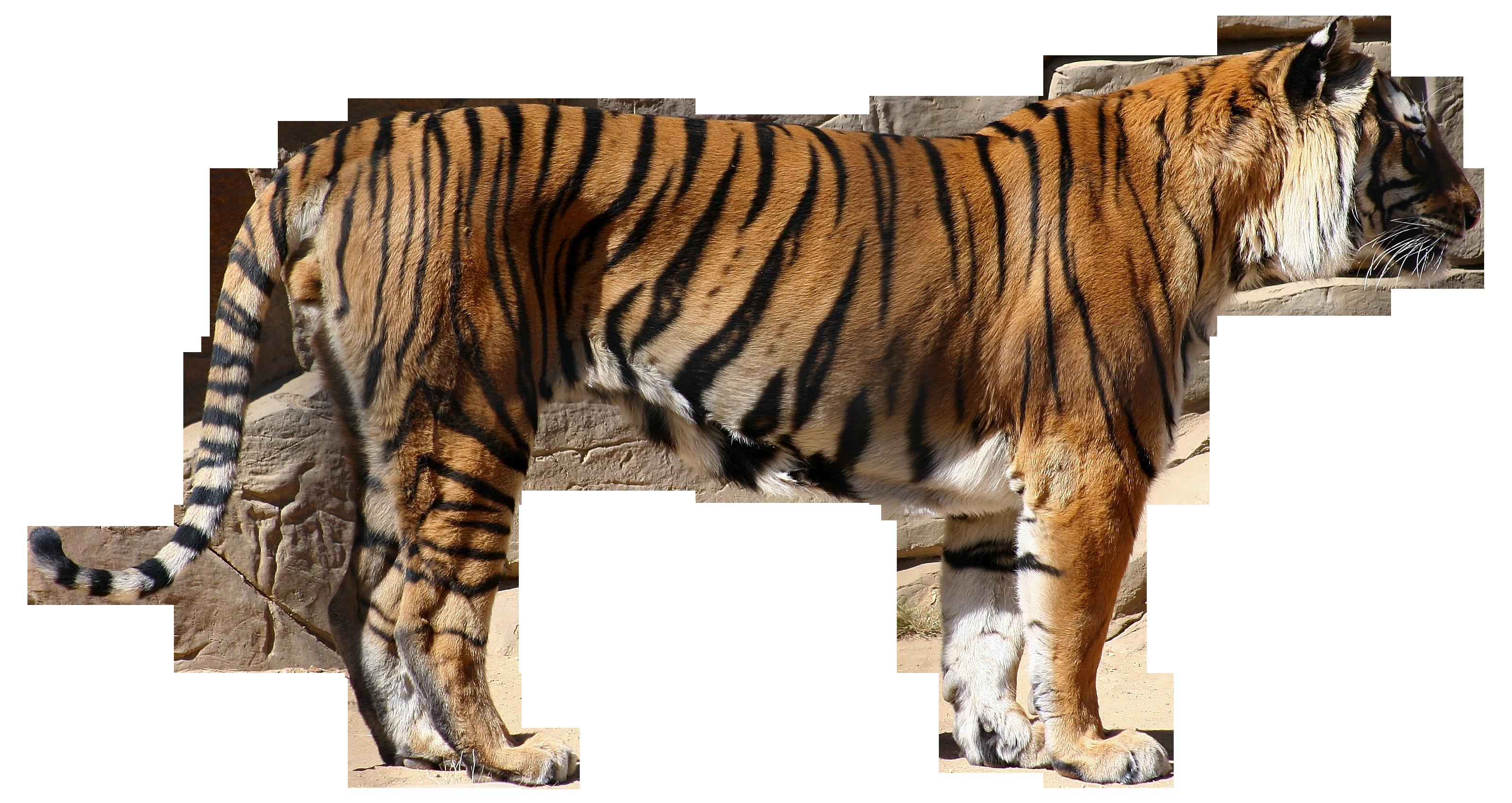картинки животные в полный рост классический