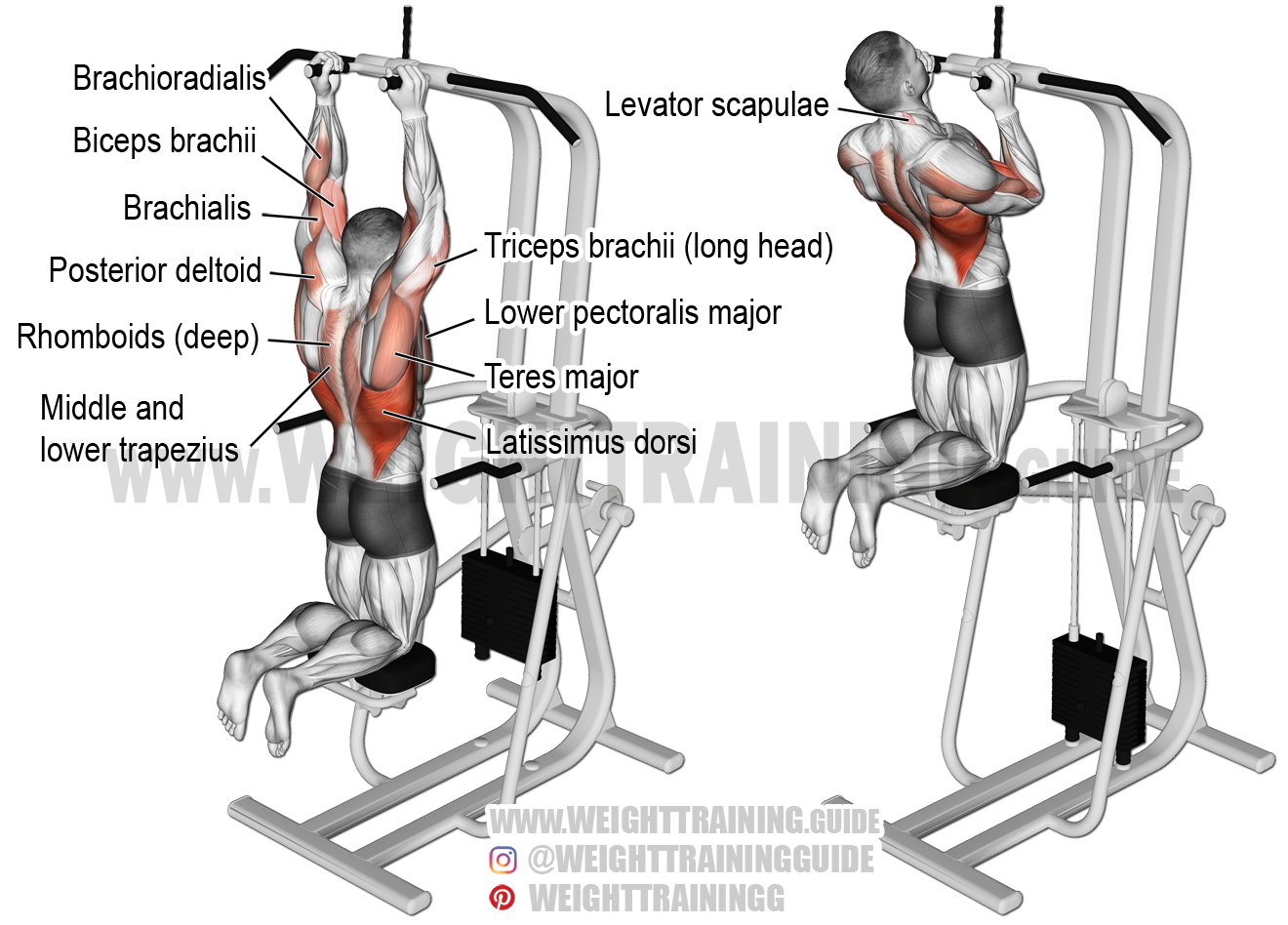 Machine Assisted Close Neutral Grip Pull Up Exercise