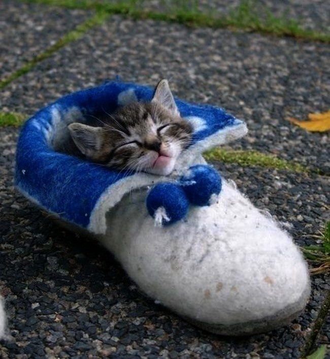 Shoe is listed or ranked 10 on the list The Best Ways to Arrange Cats  In a Shoe is listed or ranked 10 on the list The Best Ways to Arrange Cats In a Shoe is listed or r...
