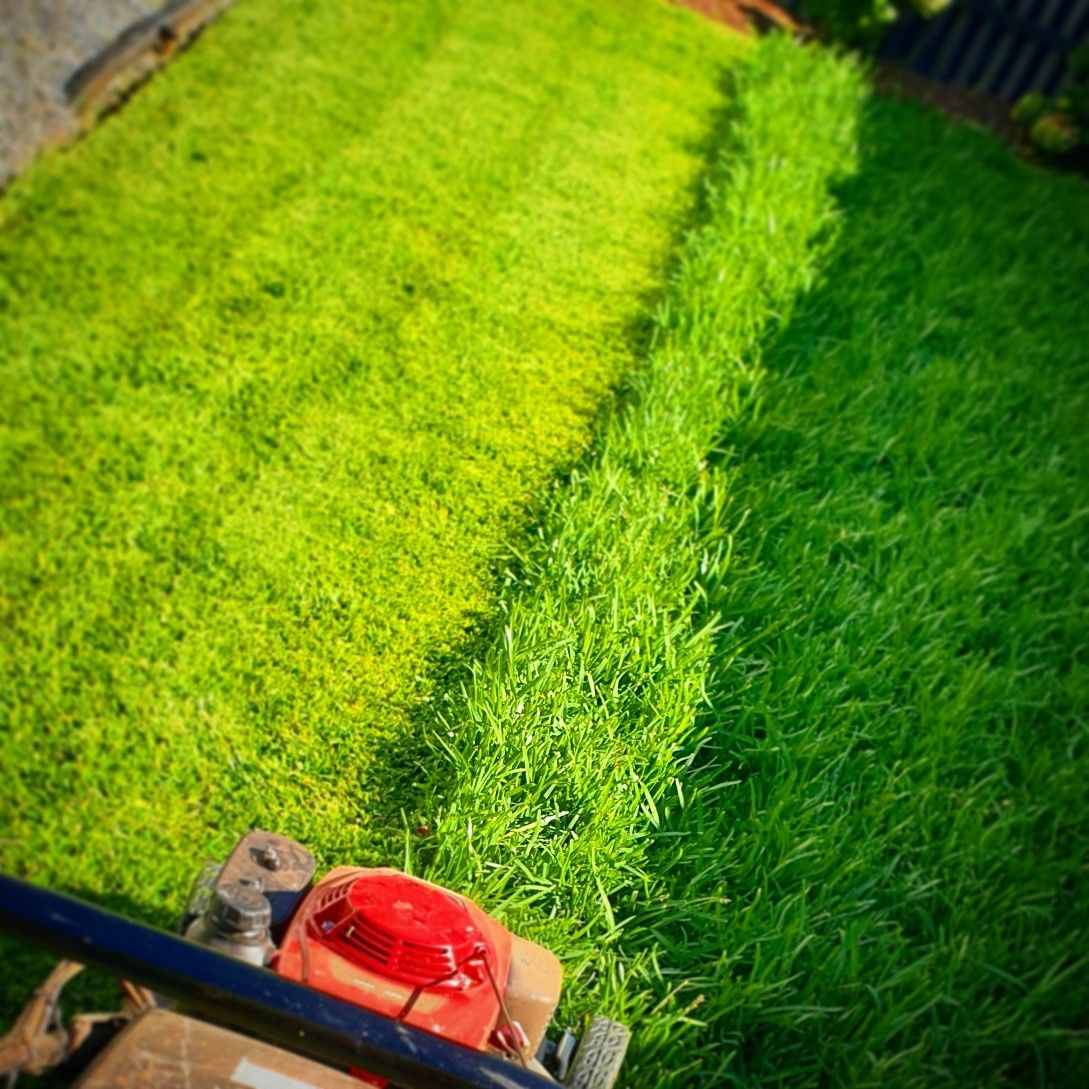Now The Rain Is Back Garden Care Lawn And Garden Lawn