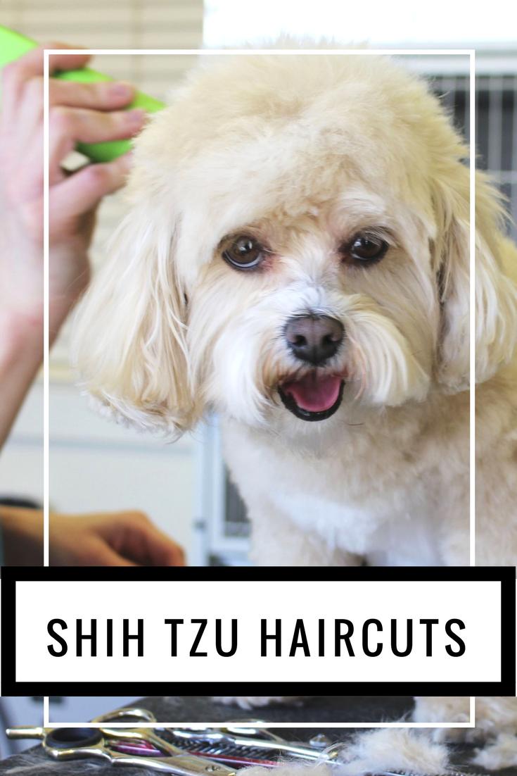 Shih tzu haircut styles shih tzu haircuts   fun and easy styles for your shih tzu  lions