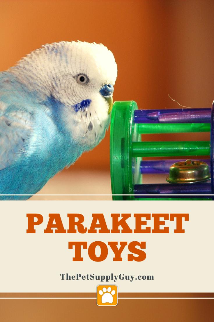Pin On Pet Bird Supplies Bird Care Tips