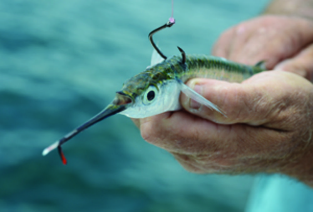 Properly hooking a live bait can make the difference in for Bass fishing with live bait